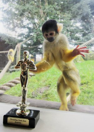 Squirrel_Monkeys___Visual_Effects.jpg