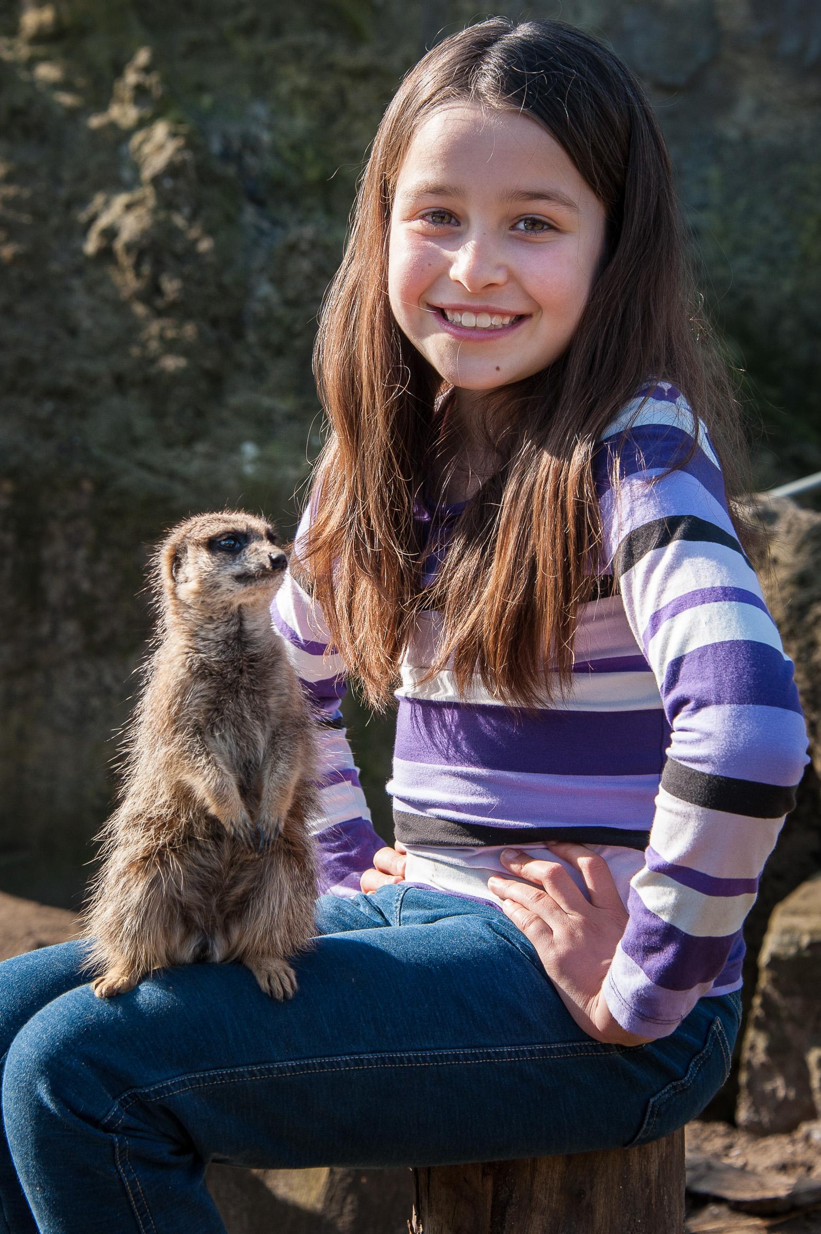 Meerkat Experience | Meet the Meerkats UK | Drusillas Park